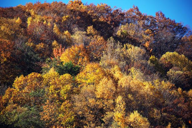 長野県 松川渓谷の紅葉2_a0263109_12481626.jpg