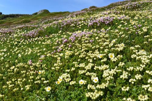 """2014年7月 大雪黒岳、北鎮岳、愛別岳、北海岳 July 2014 \""""Flowers in Taisetsu Mountains\""""_c0219616_18244591.jpg"""