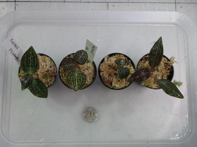 141106 熱帯魚・金魚・水草・観葉植物_f0189122_148276.jpg