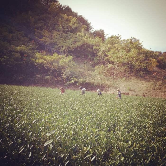 the tea picnic. 2014  終了_d0210537_193829100.jpg