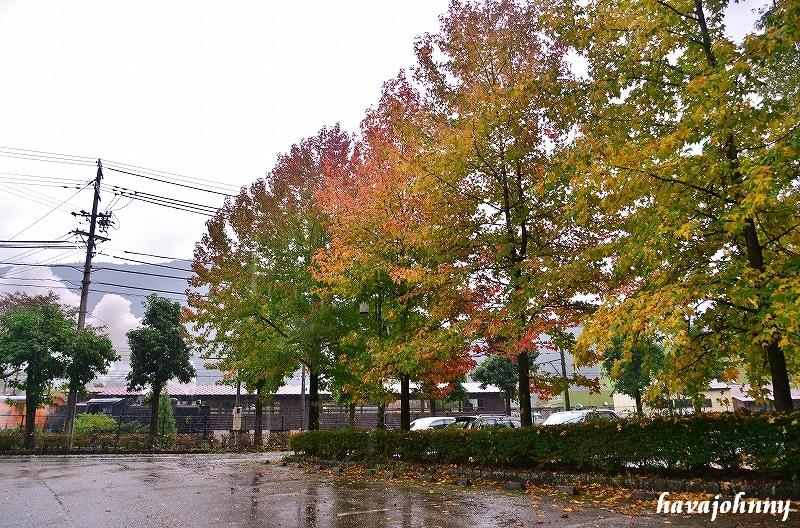 雨の慕情_c0173762_21541617.jpg