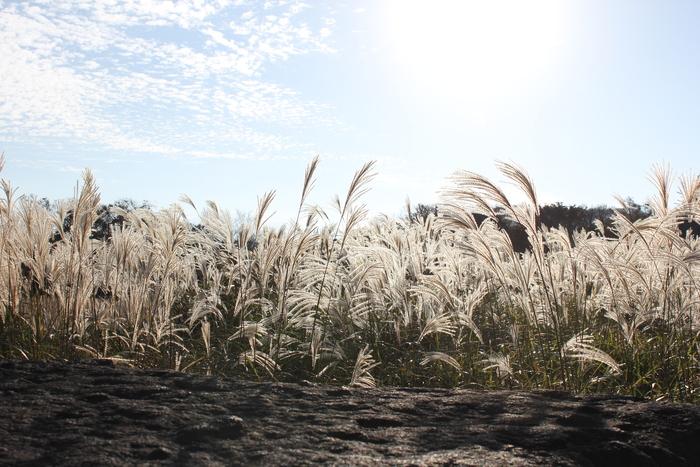 済州島とソウル 郷土料理と民族芸術に触れる旅 その4 パワースポットから冠帽資料館と石文化公園_a0223786_15153668.jpg
