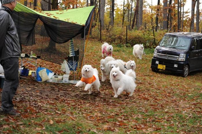 八ヶ岳キャンプ part2_a0049296_1834534.jpg