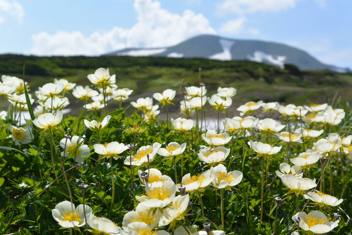 """2014年7月 大雪緑岳から黒岳へ July 2014 \""""Taisetsu Mountains\""""_c0219616_21592749.jpg"""
