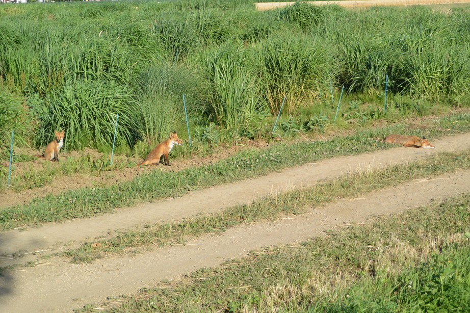 """2014年7月 北海道大学に棲む野生動物 July 2014 \""""Wild Livings in Hokkaido University\""""_c0219616_2215125.jpg"""