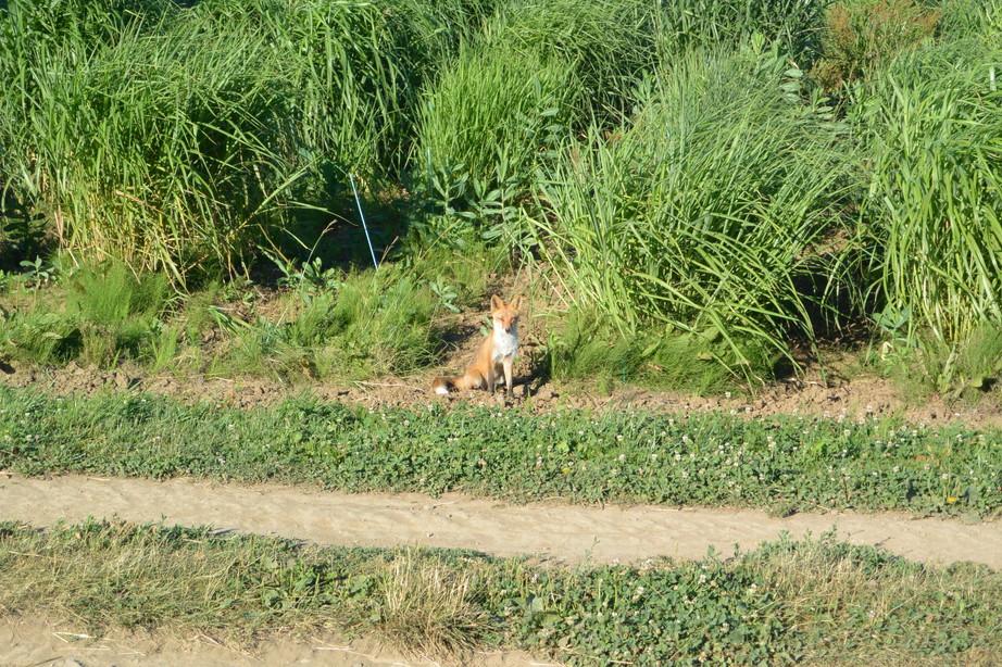 """2014年7月 北海道大学に棲む野生動物 July 2014 \""""Wild Livings in Hokkaido University\""""_c0219616_22151631.jpg"""