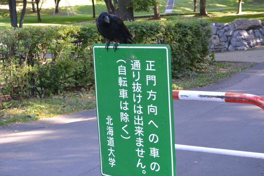 """2014年7月 北海道大学に棲む野生動物 July 2014 \""""Wild Livings in Hokkaido University\""""_c0219616_2221131.jpg"""