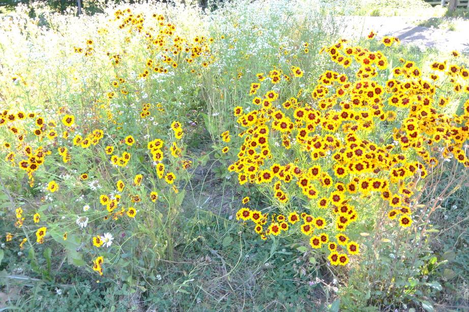 """2014年7月 北海道大学に棲む野生動物 July 2014 \""""Wild Livings in Hokkaido University\""""_c0219616_22242935.jpg"""