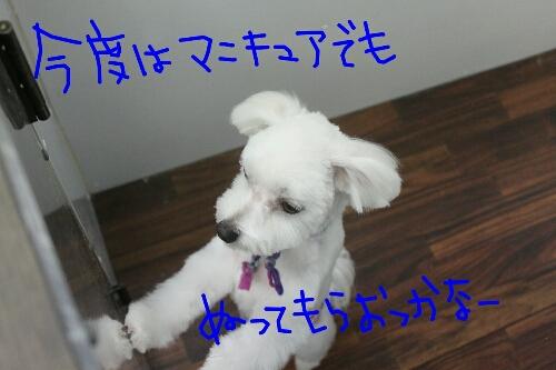 b0130018_9595551.jpg