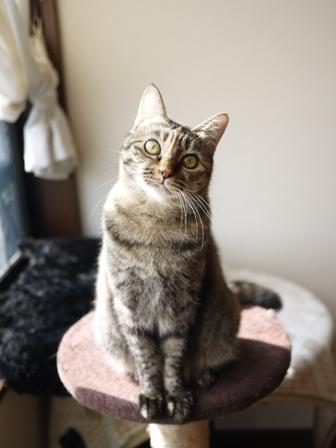 猫のお友だち ワサビちゃん天ちゃんう京くん編。_a0143140_23165372.jpg