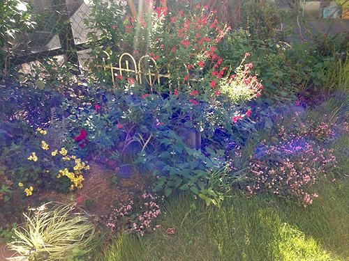 秋の庭もきれいです_e0026053_13454917.jpg