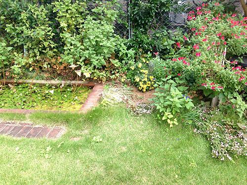 秋の庭もきれいです_e0026053_13455047.jpg