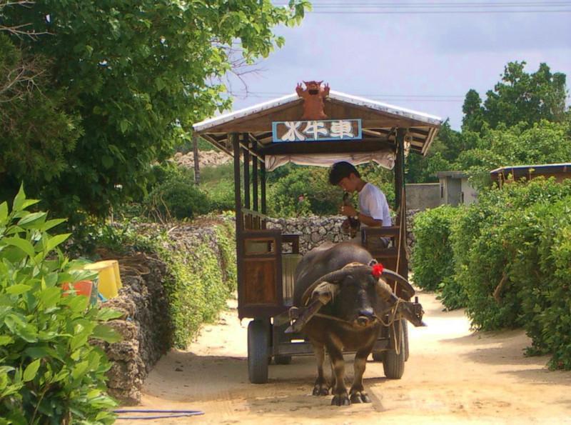 【沖縄】牛車_c0348200_16162448.jpg