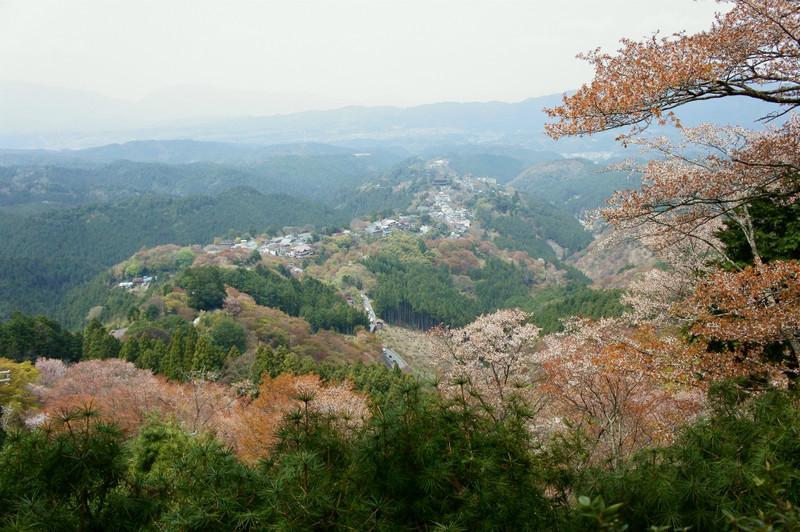【奈良】千本桜_c0348200_16163736.jpg