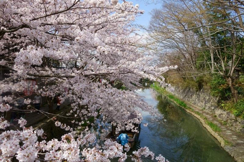 【滋賀】水郷_c0348200_16165014.jpg