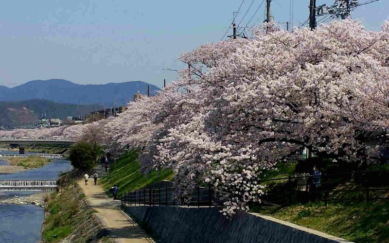 【京都】堤_c0348200_16165158.jpg