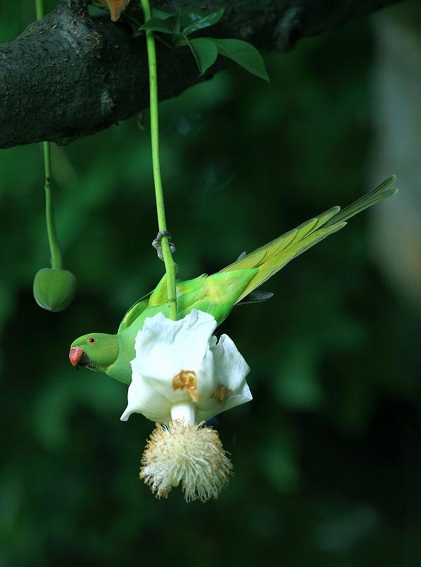 鳥の楽園_d0074828_22463396.jpg