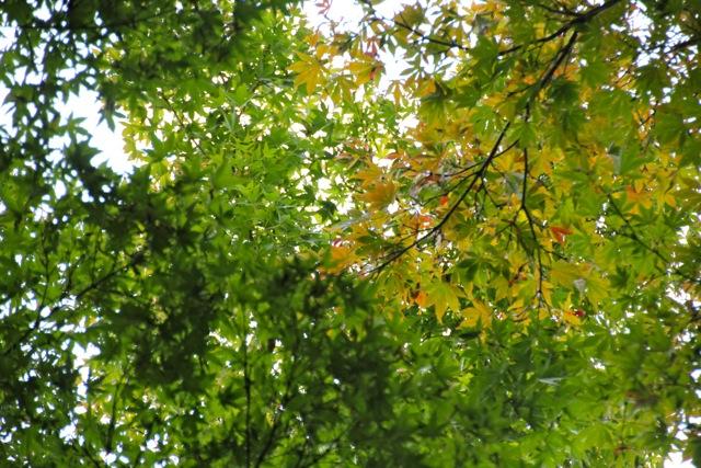 【新宿御苑】カメラ散歩 part 1_f0348831_11241780.jpg