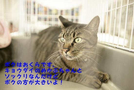 b0214836_1482968.jpg