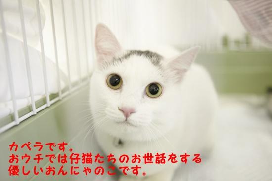 b0214836_1484365.jpg