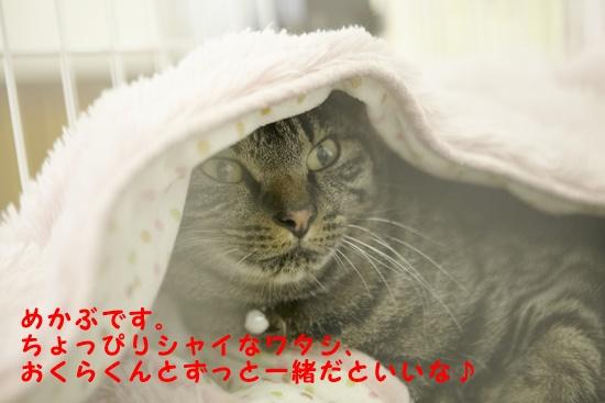 b0214836_1485681.jpg