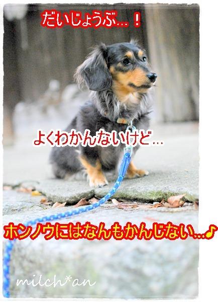 b0115642_22131398.jpg