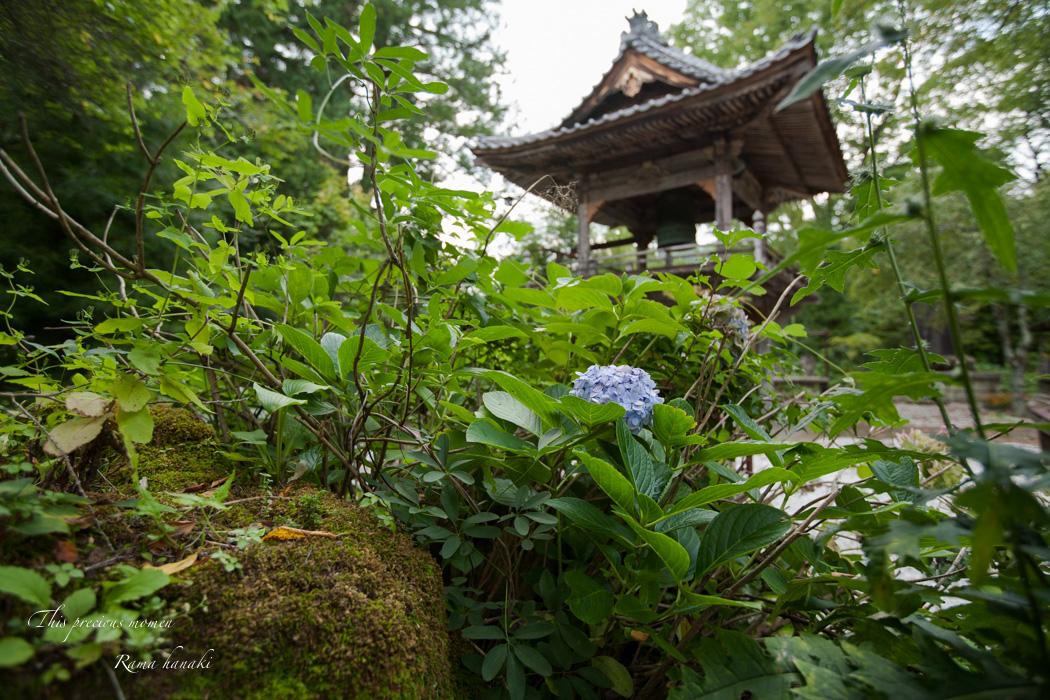 9月の海岸寺と我が家の庭にて_c0137403_15131514.jpg