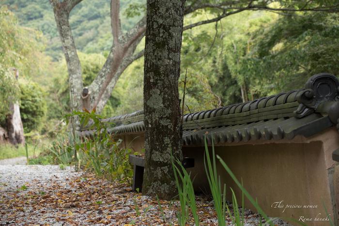 9月の海岸寺と我が家の庭にて_c0137403_1581683.jpg