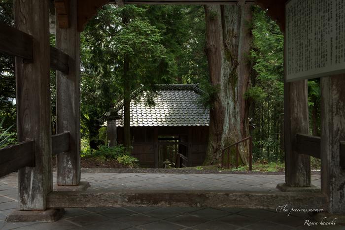 9月の海岸寺と我が家の庭にて_c0137403_1583836.jpg