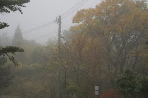 雨が上がり…_e0179508_13113123.jpg