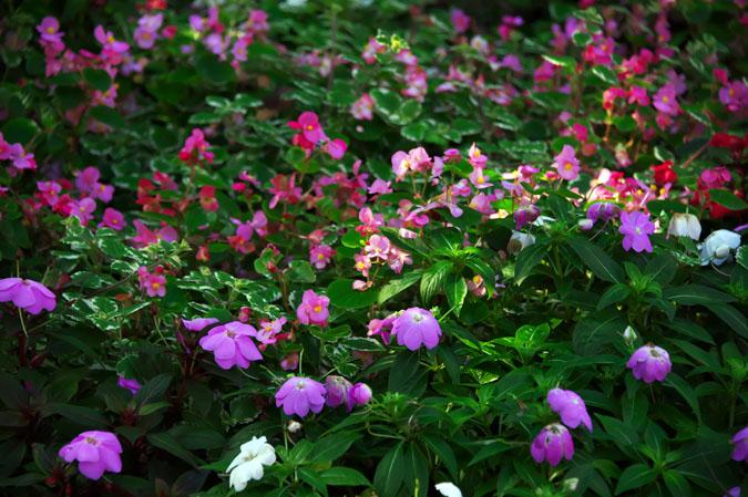 小布施町 「フローラルガーデンおぶせ」の秋の花々1_a0263109_20401867.jpg