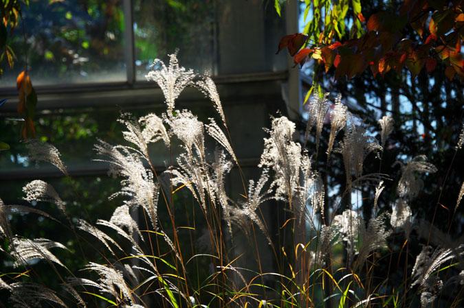 小布施町 「フローラルガーデンおぶせ」の秋の花々1_a0263109_20402086.jpg