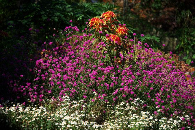 小布施町 「フローラルガーデンおぶせ」の秋の花々1_a0263109_20402139.jpg