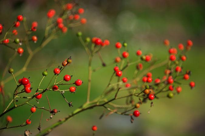 小布施町 「フローラルガーデンおぶせ」の秋の花々1_a0263109_20402334.jpg