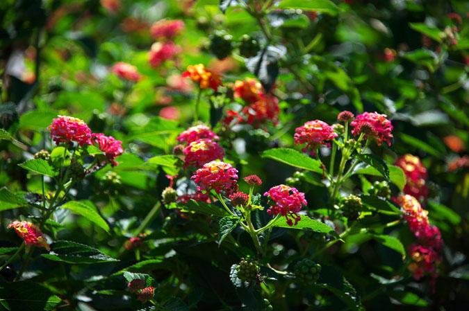 小布施町 「フローラルガーデンおぶせ」の秋の花々1_a0263109_20402562.jpg