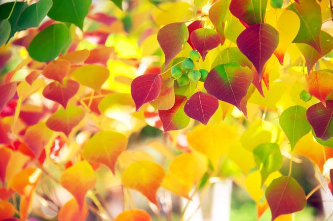 小布施町 「フローラルガーデンおぶせ」の秋の花々1_a0263109_20402726.jpg
