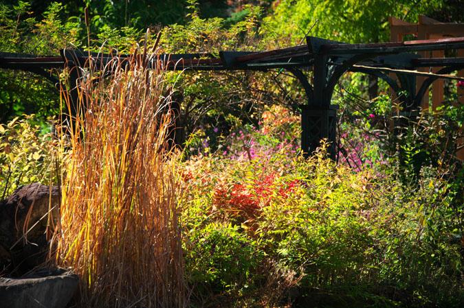 小布施町 「フローラルガーデンおぶせ」の秋の花々1_a0263109_20402944.jpg