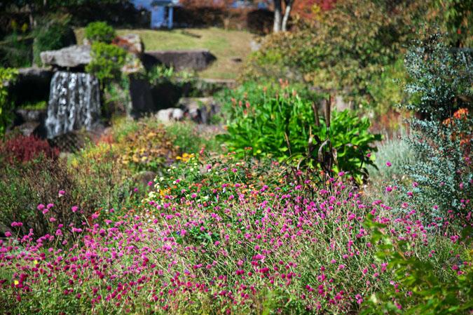 小布施町 「フローラルガーデンおぶせ」の秋の花々1_a0263109_20403146.jpg