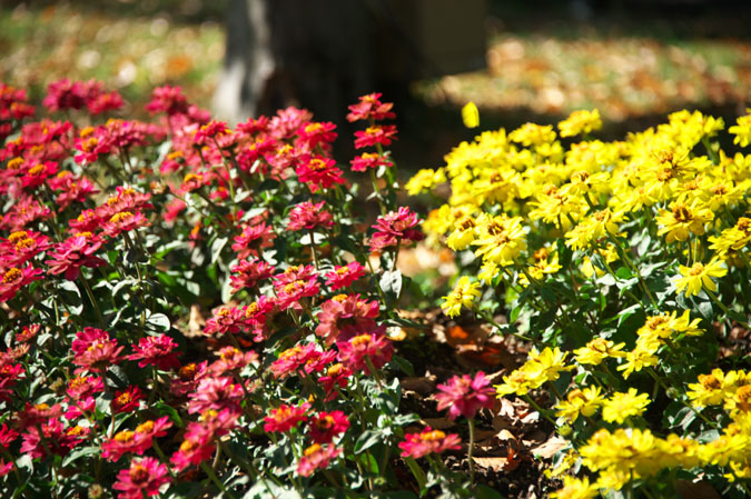 小布施町 「フローラルガーデンおぶせ」の秋の花々1_a0263109_20403227.jpg