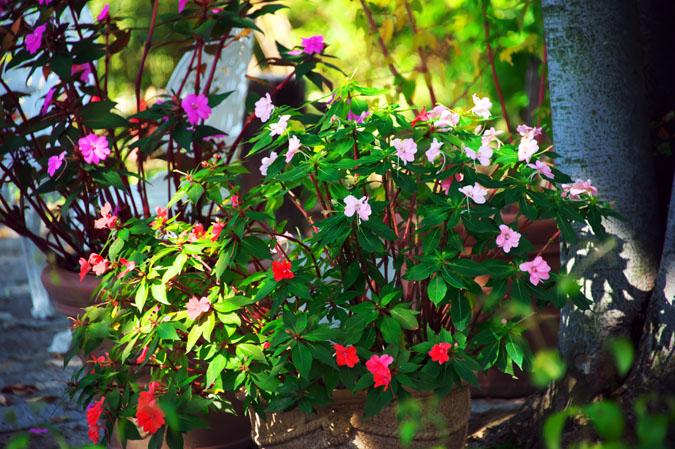 小布施町 「フローラルガーデンおぶせ」の秋の花々1_a0263109_20403465.jpg