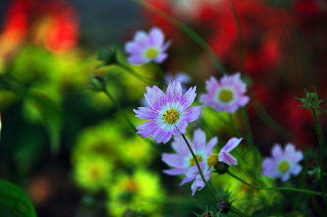 小布施町 「フローラルガーデンおぶせ」の秋の花々1_a0263109_20403549.jpg