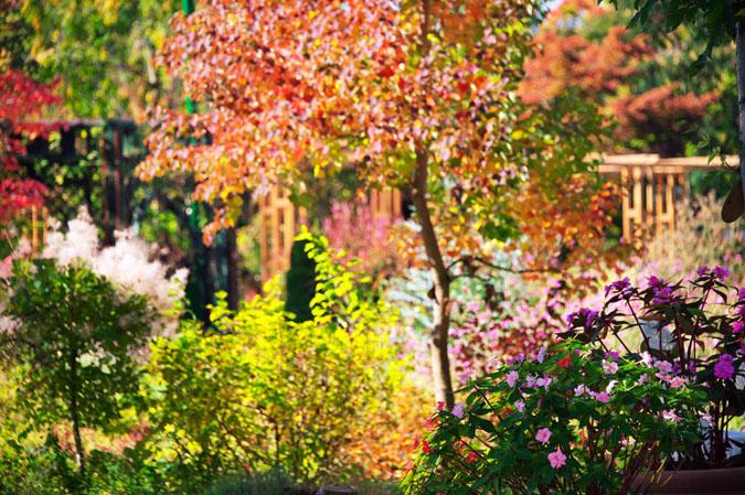 小布施町 「フローラルガーデンおぶせ」の秋の花々1_a0263109_20403857.jpg