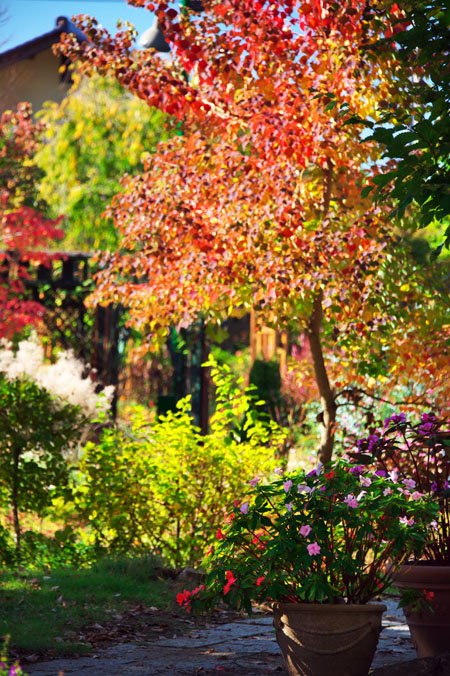 小布施町 「フローラルガーデンおぶせ」の秋の花々1_a0263109_20404032.jpg