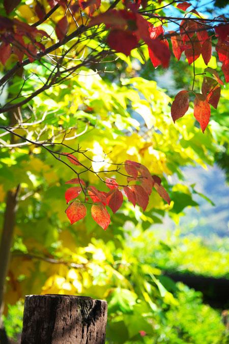 小布施町 「フローラルガーデンおぶせ」の秋の花々1_a0263109_20413251.jpg