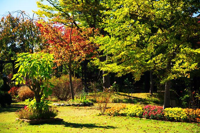 小布施町 「フローラルガーデンおぶせ」の秋の花々1_a0263109_20414616.jpg