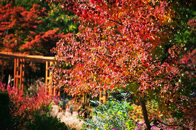 小布施町 「フローラルガーデンおぶせ」の秋の花々1_a0263109_20415991.jpg
