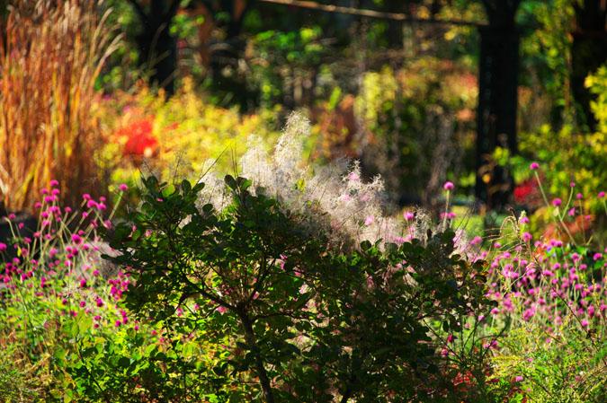 小布施町 「フローラルガーデンおぶせ」の秋の花々1_a0263109_20422053.jpg