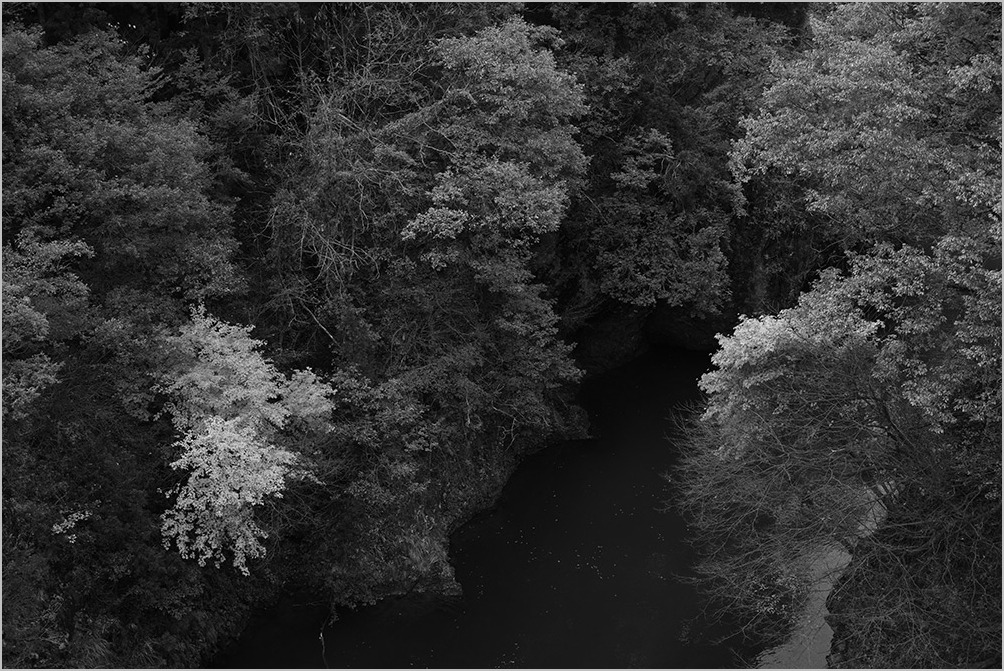 紅葉をモノクロームで撮る勇気 monochrome #DP1Q#DP2Q#DP3M_c0065410_19542738.jpg