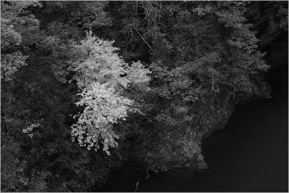 紅葉をモノクロームで撮る勇気 monochrome #DP1Q#DP2Q#DP3M_c0065410_2025548.jpg