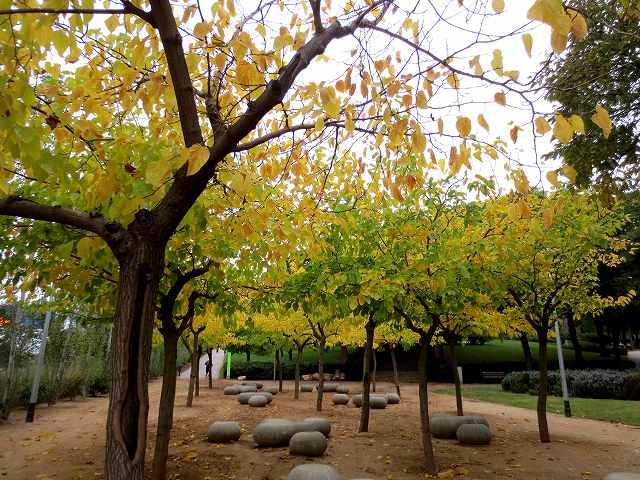 セルバンテス公園の黄_b0064411_05245911.jpg